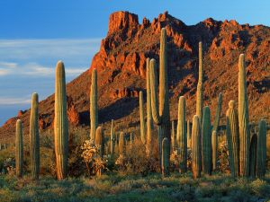 Arizona-Desert-Cactus-HD-Wallpapers